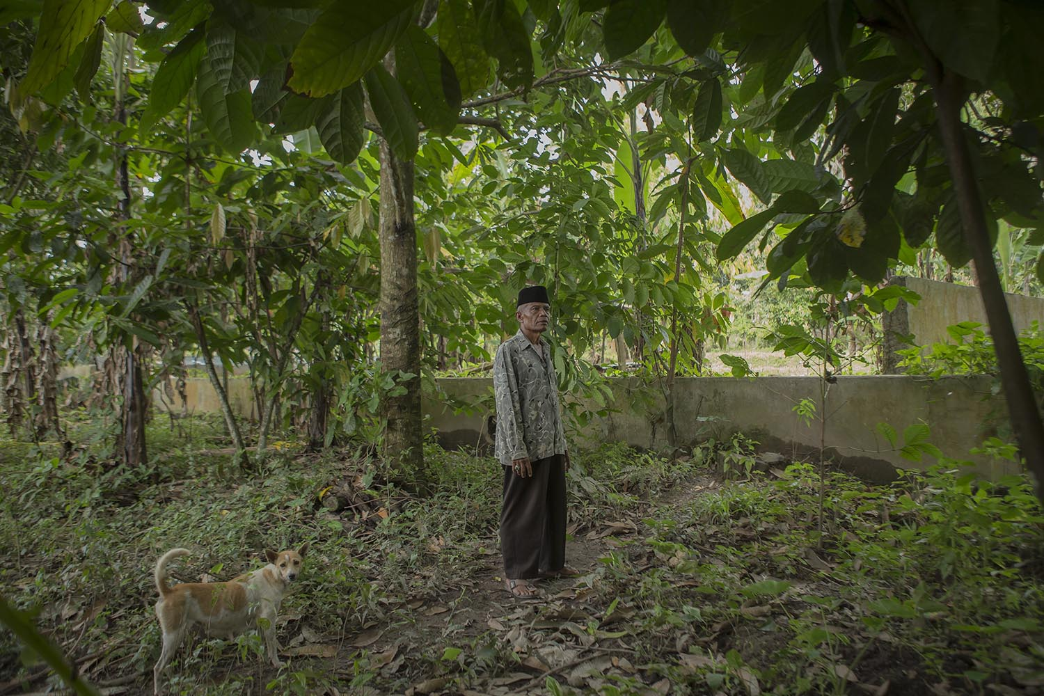 Muhajirin Tanjung Imam Nan Basa in his farm. After retiring from the army, he chose to stay in his home town. JP/Ramadhani