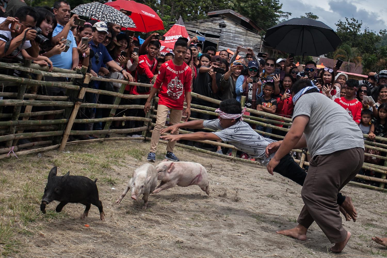 Got 'em!: Blindfolded competitors try to catch pigs. JP/Andri Ginting