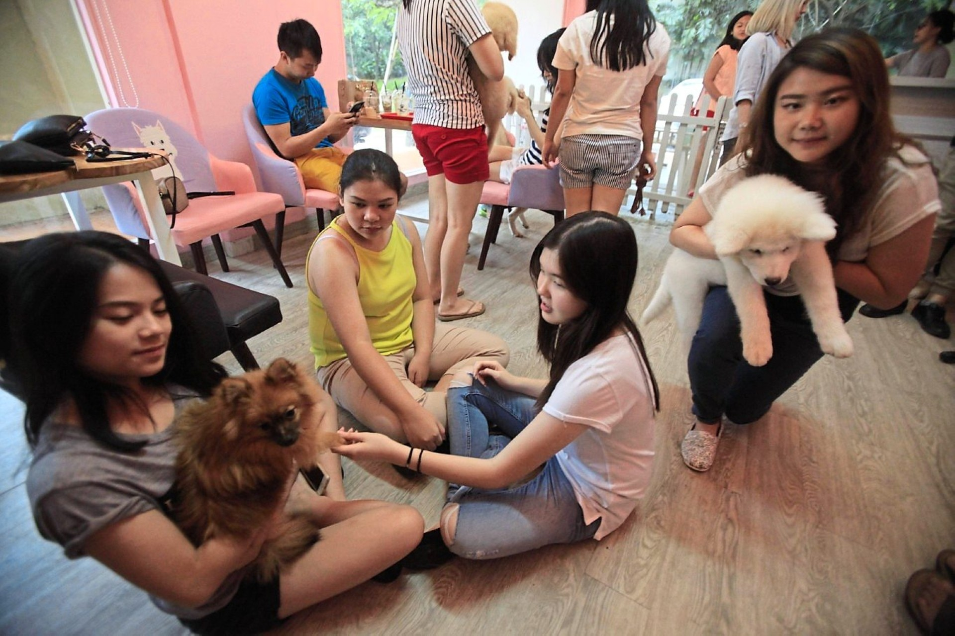 Coffee and beagle: Animal-friendly cafes jazz up meal time for pet lovers