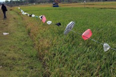 Recycled 'scarecrows': Plastic bags are suspended along a paddy field. The bags produce noise when the wind blows, which keeps birds away from the grain. JP/Magnus Hendratmo