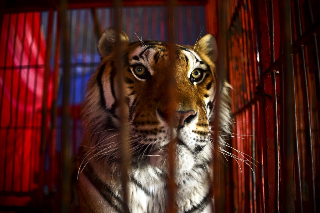 As France dithers, Paris bans use of wild animals in circuses - The Jakarta Post - Jakarta Post