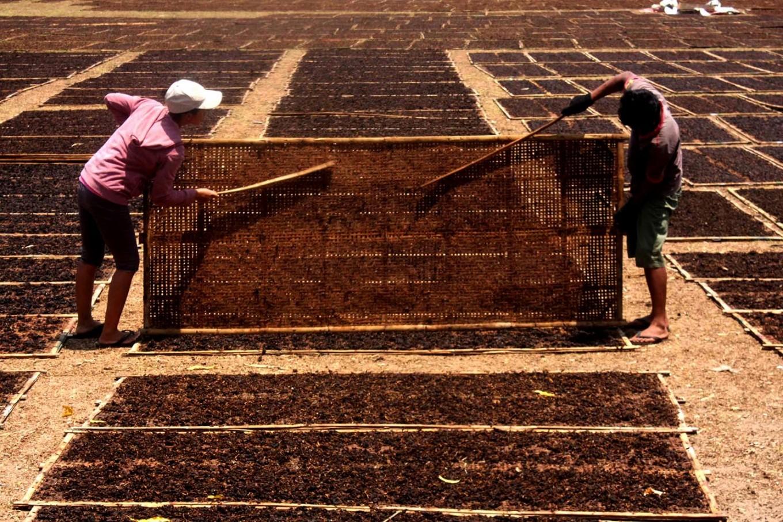 Farmers dry their tobacco. JP/Maksum Nur Fauzan