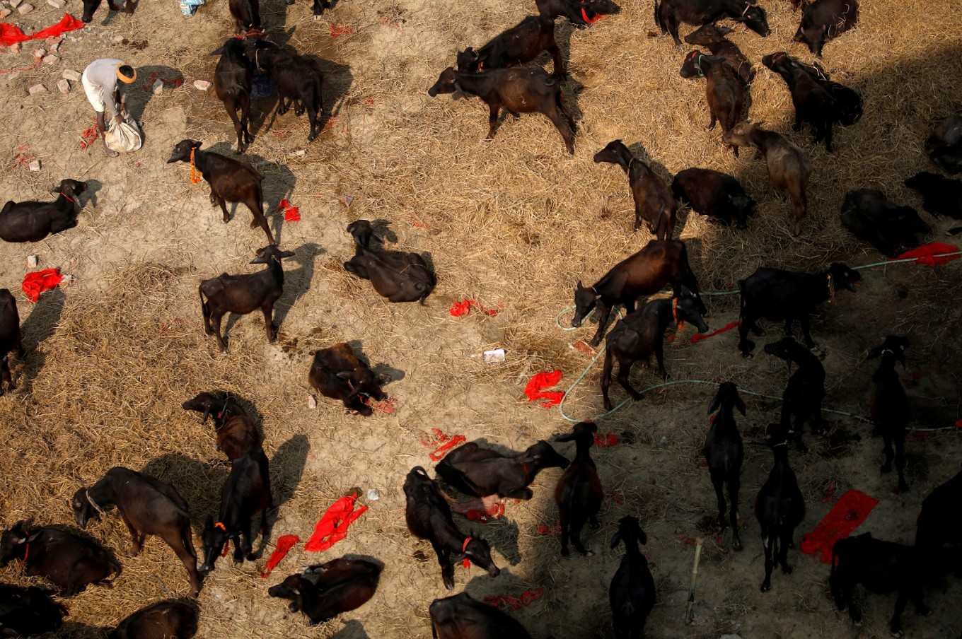 Thousands of animals sacrificed in Nepal Hindu ritual amid outcry