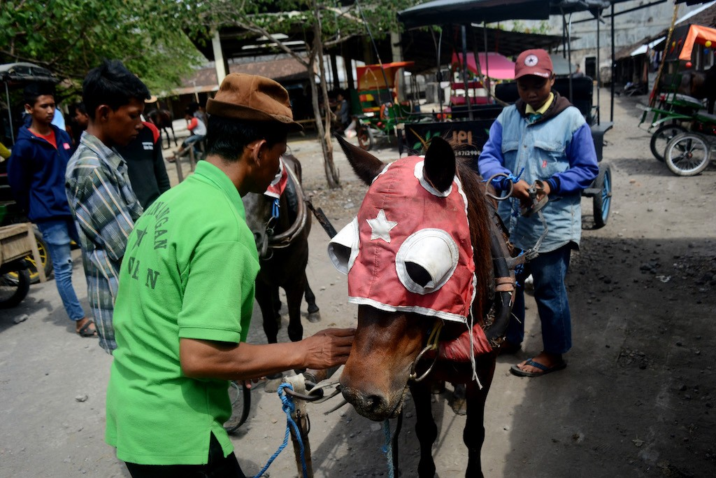 Many horses sold at Plembon Market are used in tourism