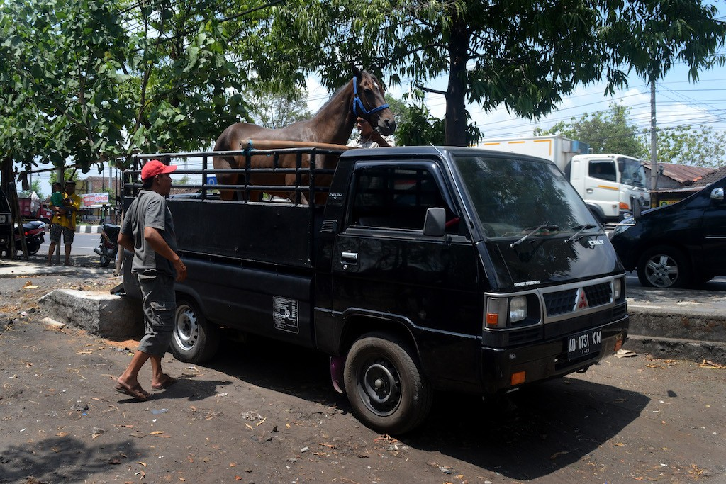 A horse is transported to a nearby town.