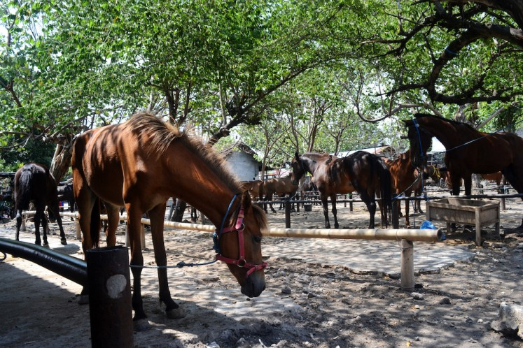 Horse power: Klaten's Plembon Market opens to excitement