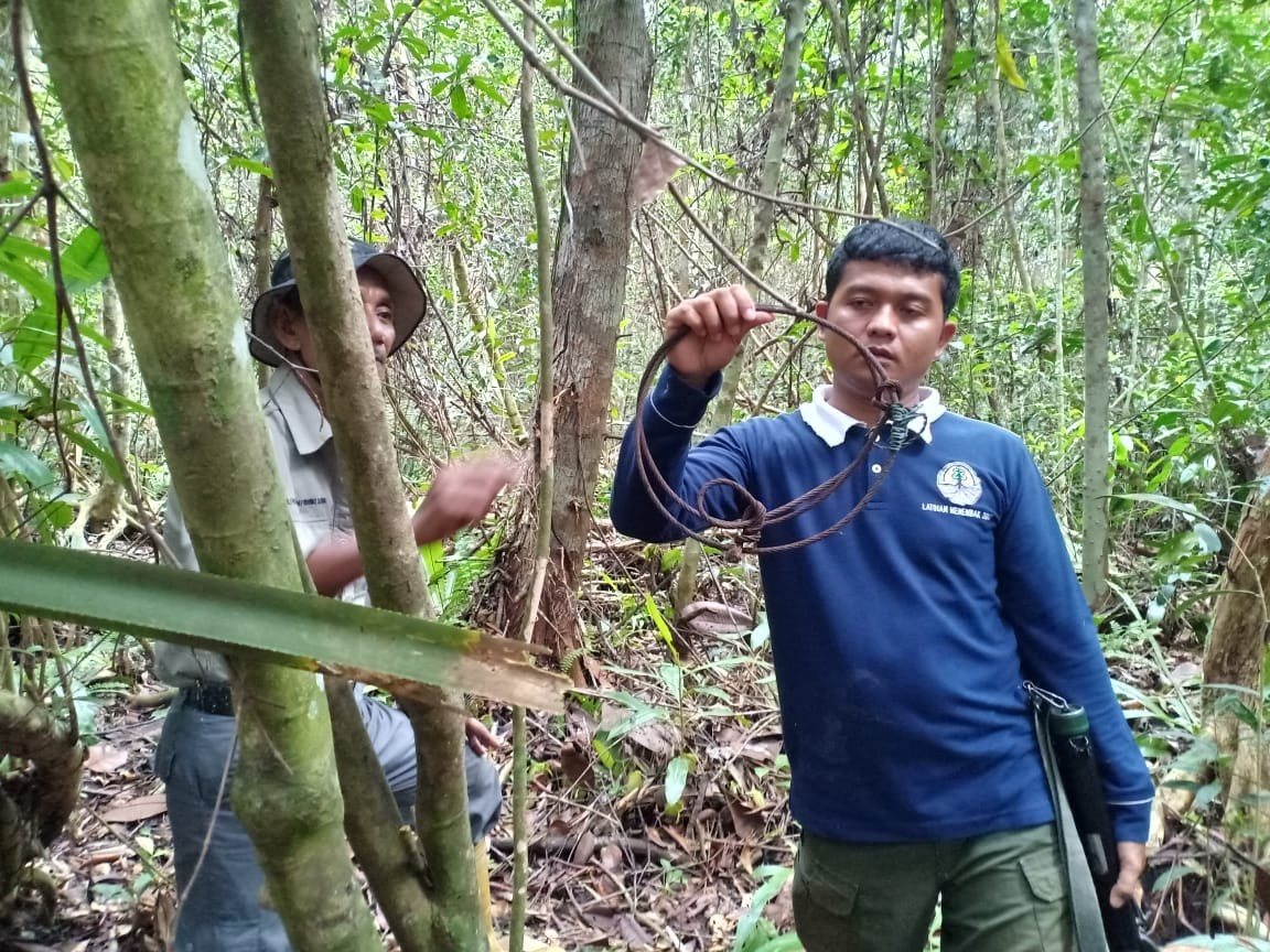 Saving wildlife: Rangers find, dismantle hundreds of traps in conservation areas in Riau