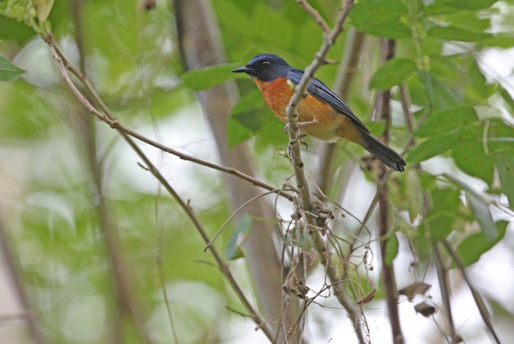 10 new bird species and subspecies found on remote Indonesian islands