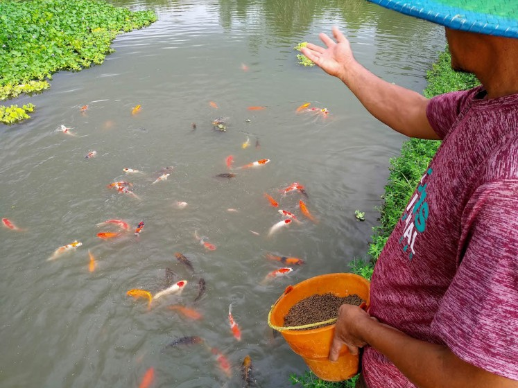 Big fish: Koi farming flourishes in East Java's Blitar