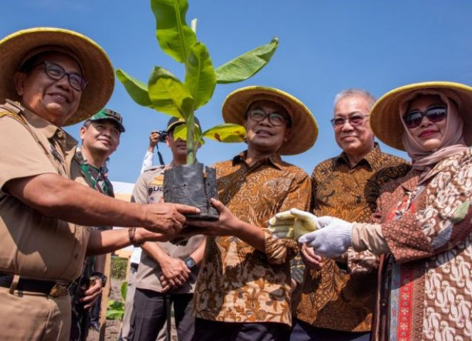 Indonesia develops Cavendish banana plantations in Blitar to boost exports