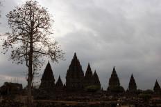 Kapok trees in Prambanan Temple in Klaten, Central Java. JP/ Magnus Hendratmo