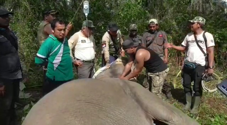 Riau agency puts GPS collars on wild elephants to prevent conflicts with humans