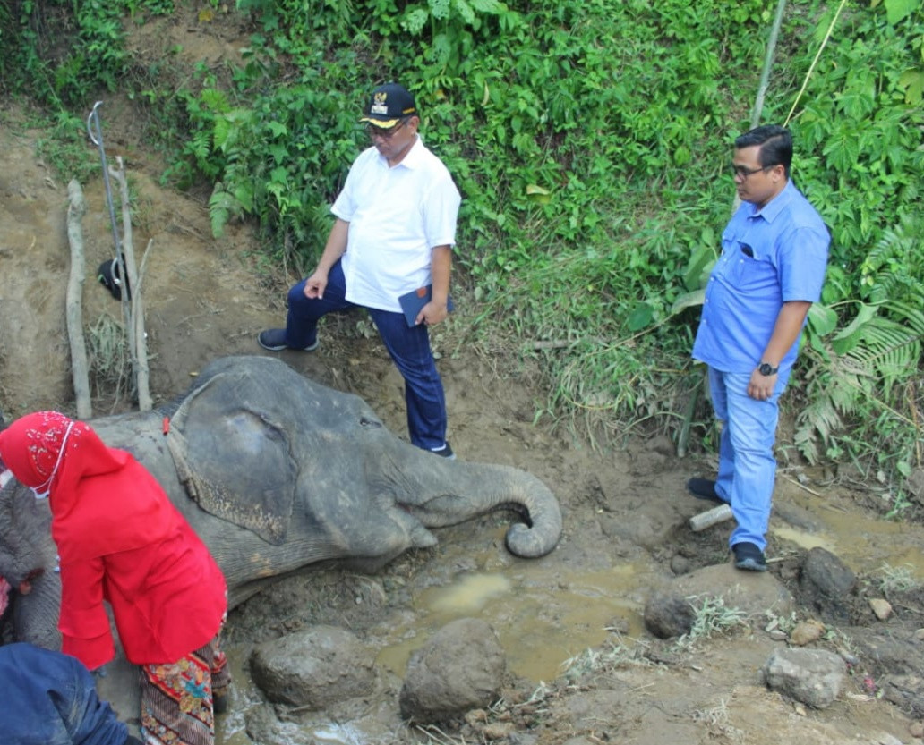 55-year-old elephant dies at Medan Zoo after losing appetite for days