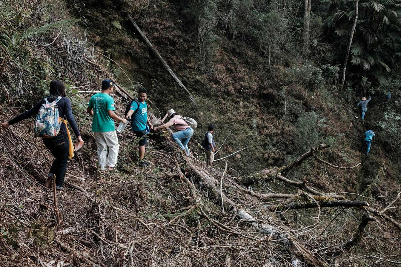 Farmers and volunteers walk over a fallen tree. JP/Anggara Mahendra