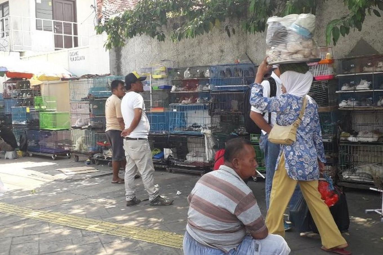 Indonesia, time to ban wildlife markets: Activists' take on Wuhan coronavirus