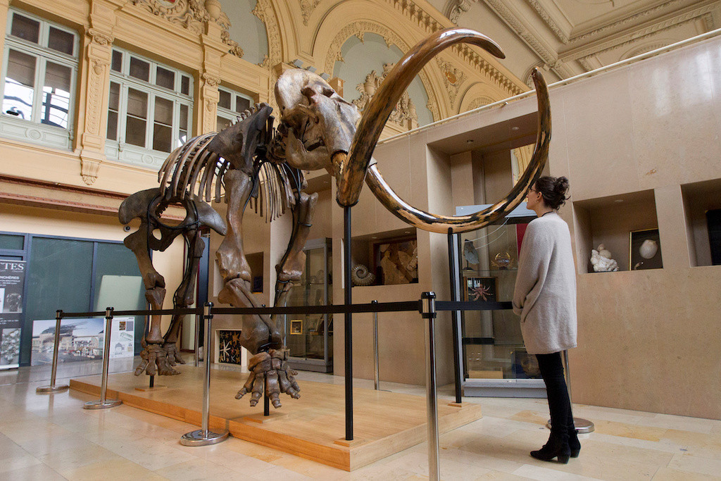 The bitter end: Last woolly mammoths plagued by genetic defects