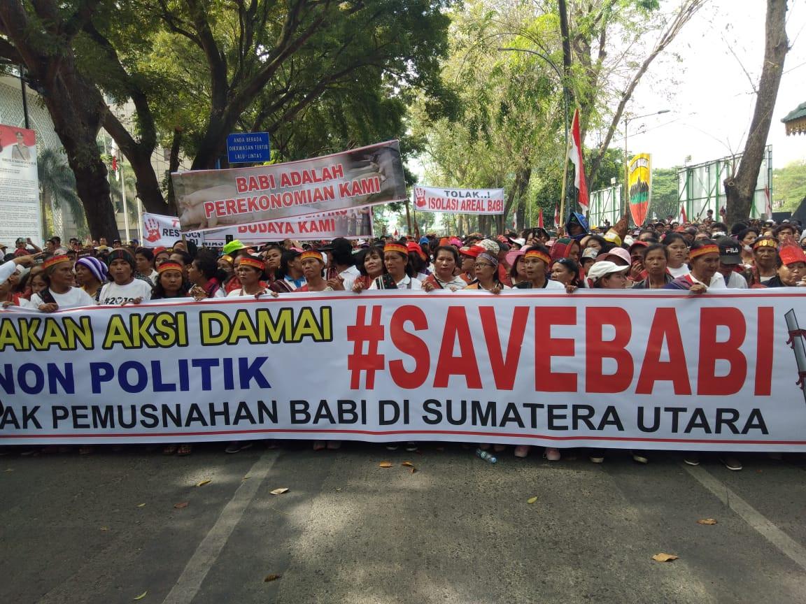 #SaveBabi: Medan demonstrators protest pig culling amid swine fever outbreak