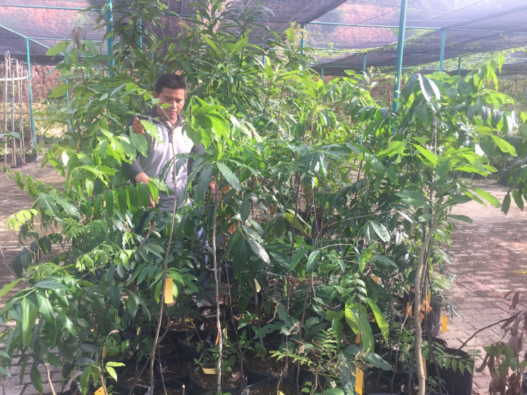 Batam Botanical Gardens chief supervisor Mohammad Rozik tends to plants in a hothouse.