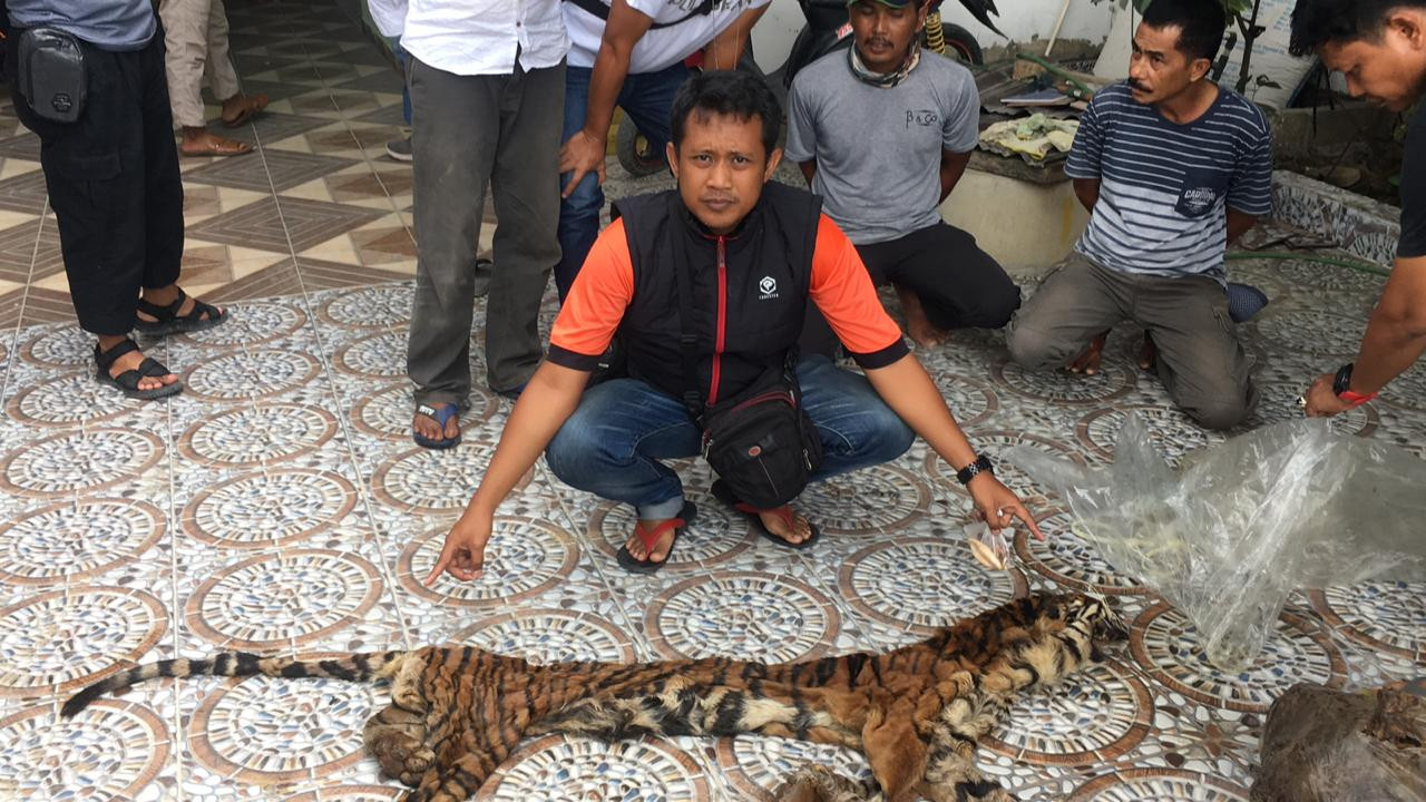 Riau Police arrest members of crime ring implicated in tiger organ trade