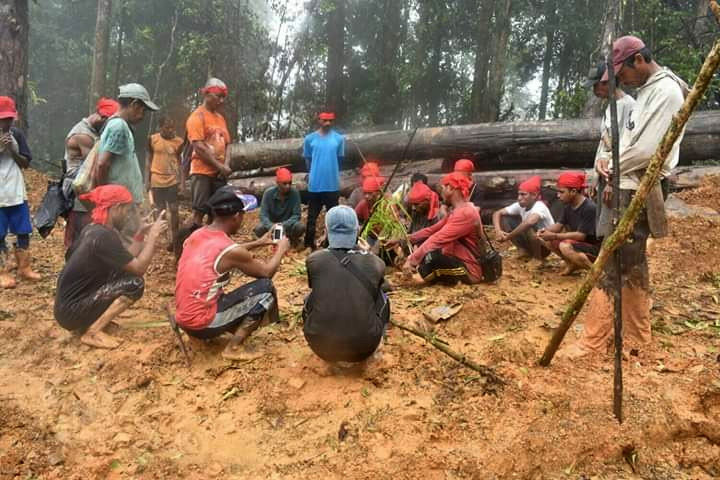 Maluku indigenous people arrested amid conflict with company over disputed forest