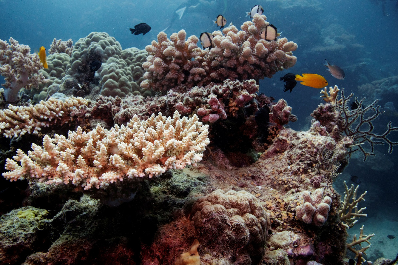 Australia's Great Barrier Reef shows signs of new coral bleaching