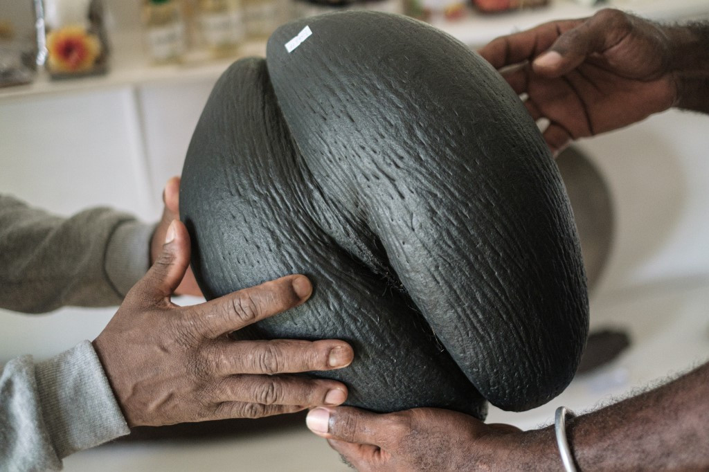 Booming business of the booty-ful nut of the Seychelles