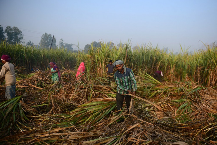 In this photograph taken on December 7, 2018 Indian labourers harvest sugarcane in a field along the Lucknow to Faizabad highway in northern Uttar Pradesh state.