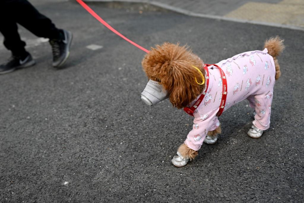 Quarantined dog tests negative for coronavirus in HK
