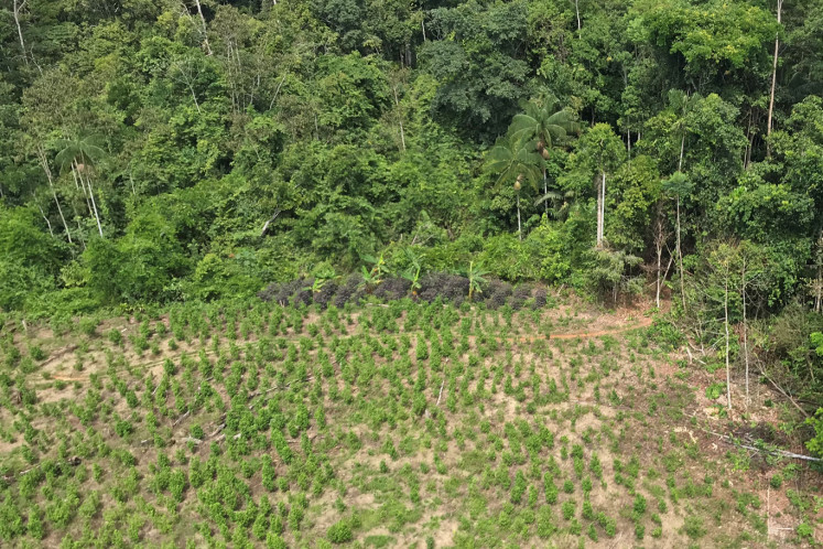 An ariel view of cocaine plantation in Caballococha, Peru November 2, 2019. Picture taken November 2, 2019.
