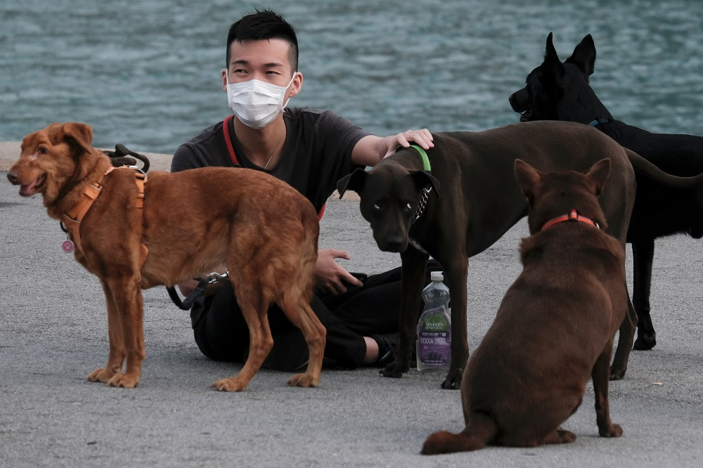 Elderly dog dies in Hong Kong after release from precautionary coronavirus quarantine