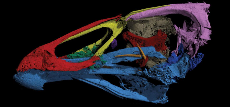 Wonderchicken' fossil from Belgium reveals dawn of modern birds
