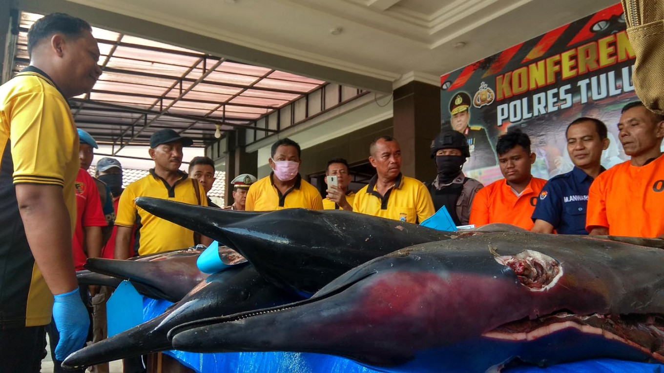 Fisherman in East Java arrested for catching protected dolphins