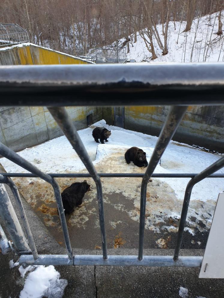 Bears in confinement at the Showa Shinzan Bear Ranch in the Usu district in Hokkaido, Japan.