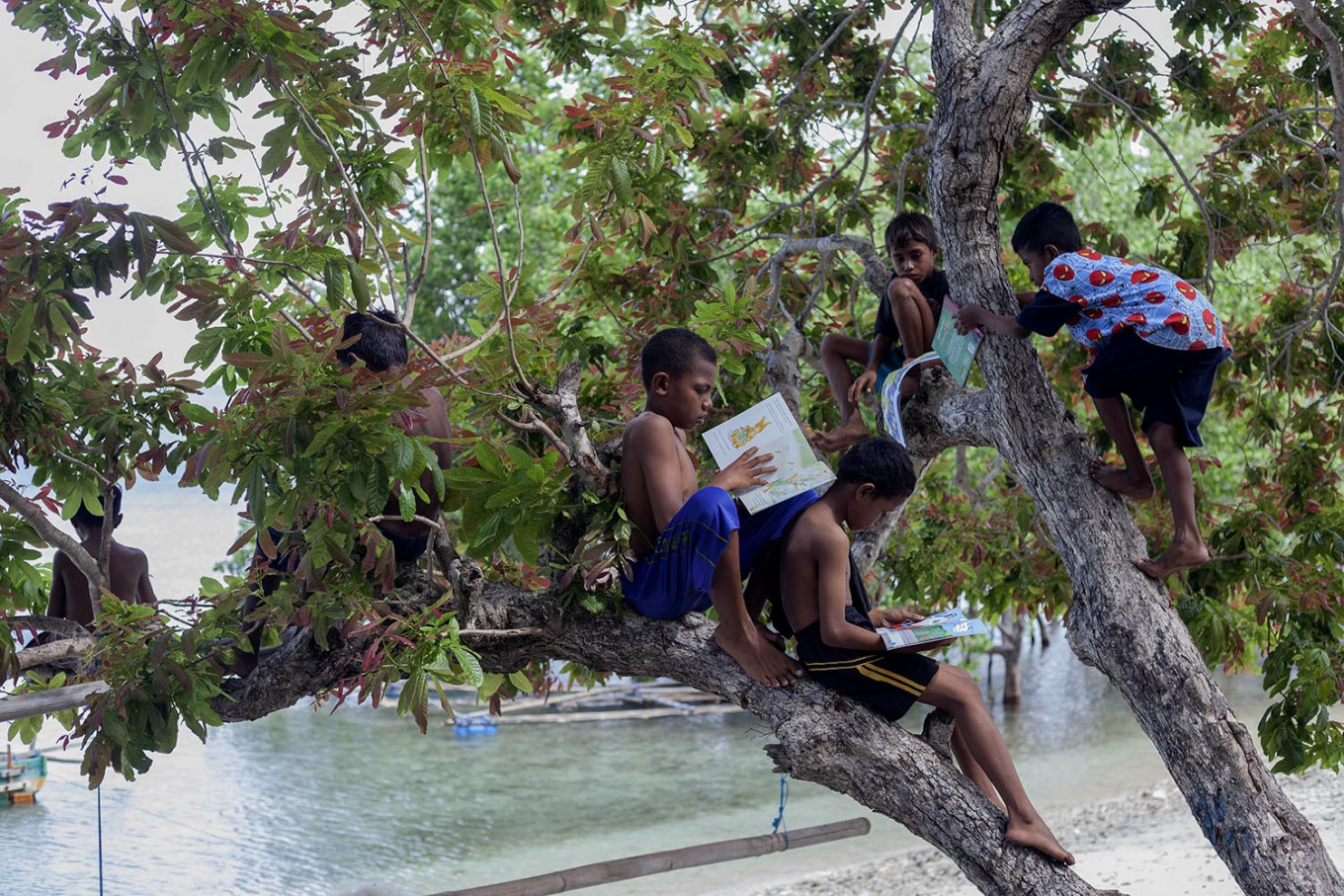 Children perch in a tree to read at Mali Beach on Alor Island, East Nusa Tenggara. JP/ Yusuf Wahil