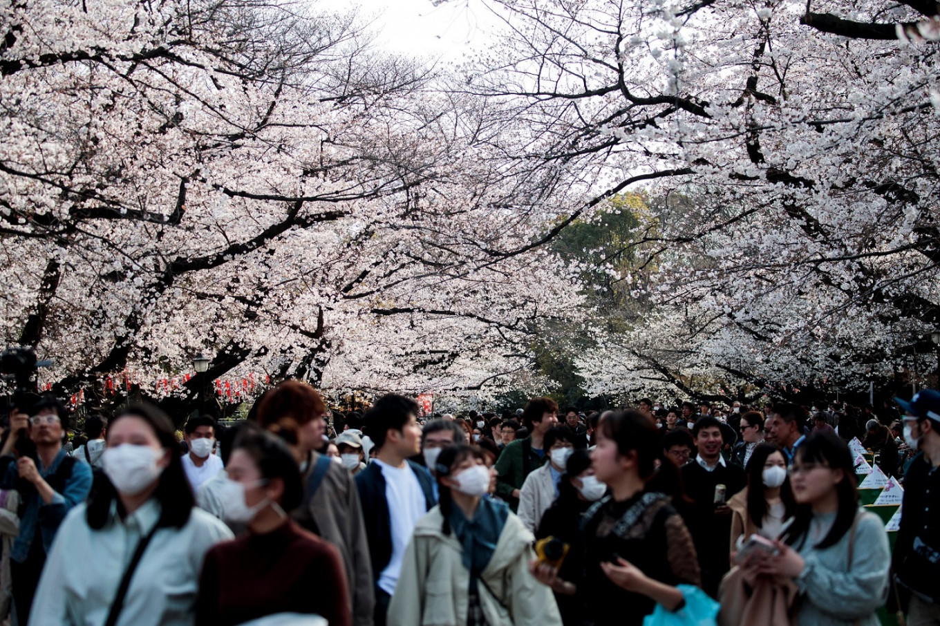 'Joy of spring': Japan fetes cherry blossoms despite virus