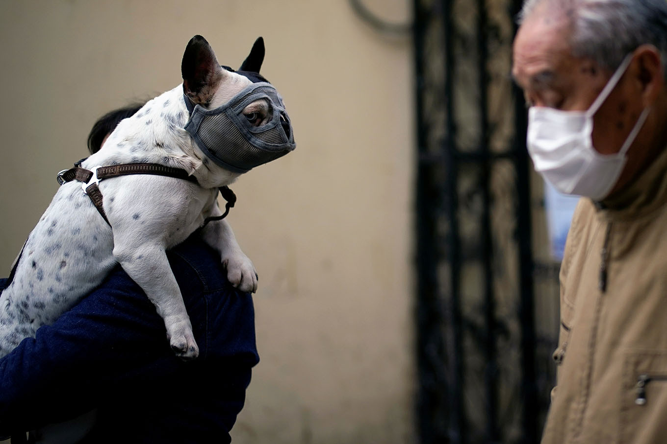 Wash your hands after stroking your pet, say French experts