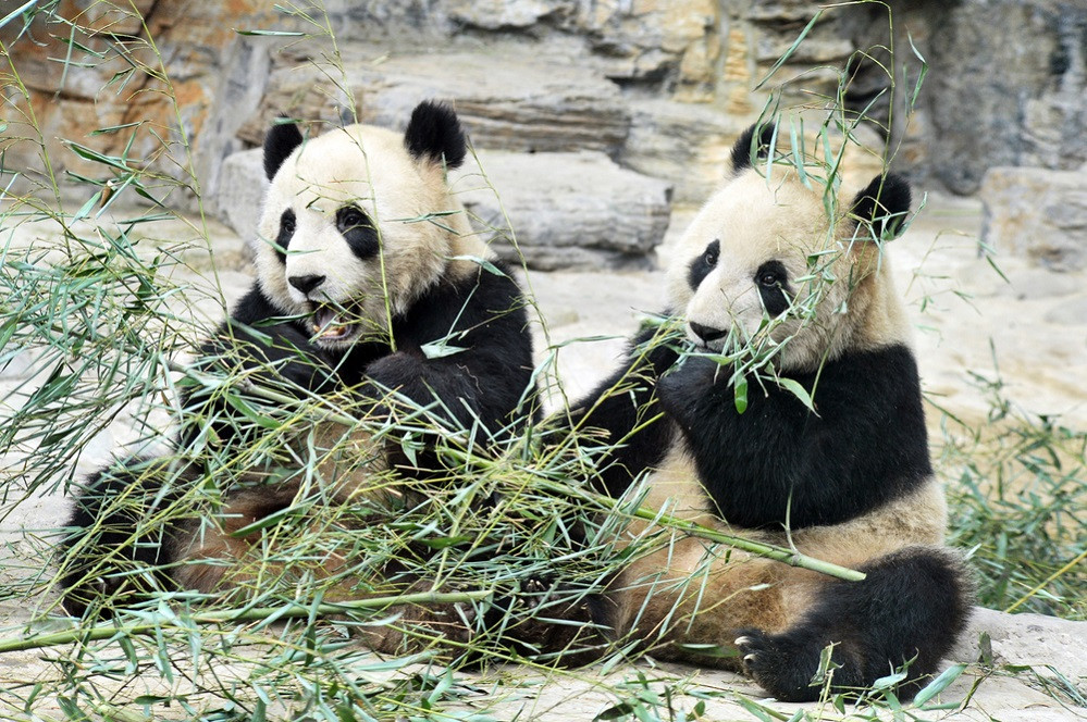 Beijing zoo reopens after 59 days