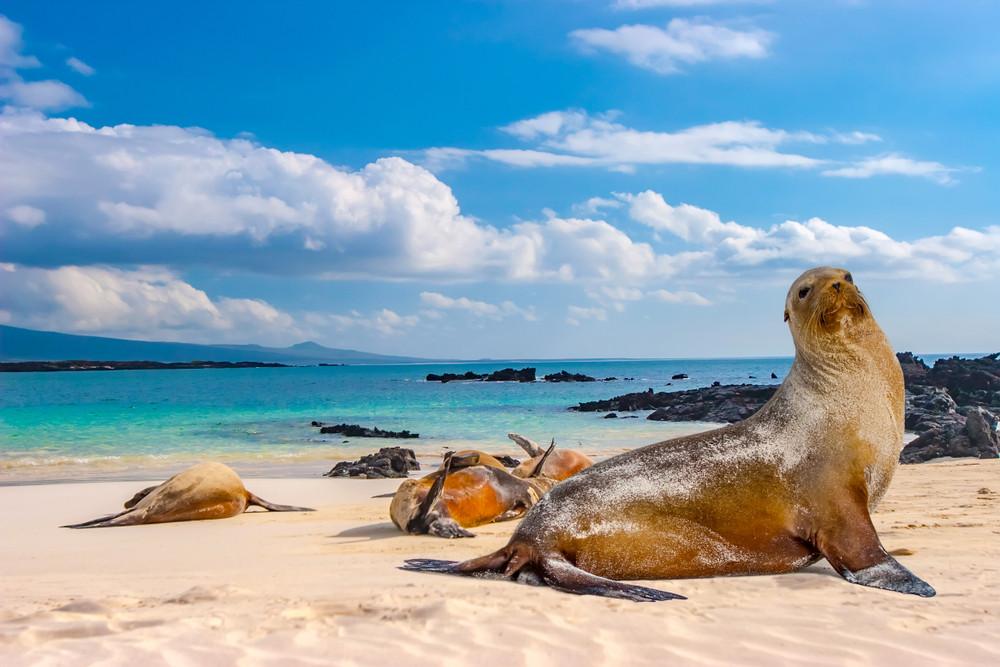 Coronavirus reaches world heritage Galapagos Islands