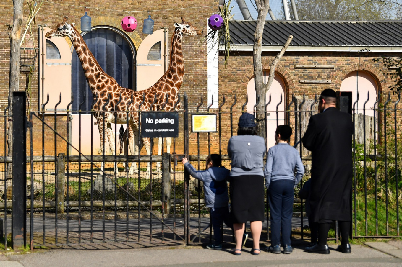 Shut by coronavirus, London Zoo seeks donations to safeguard animals