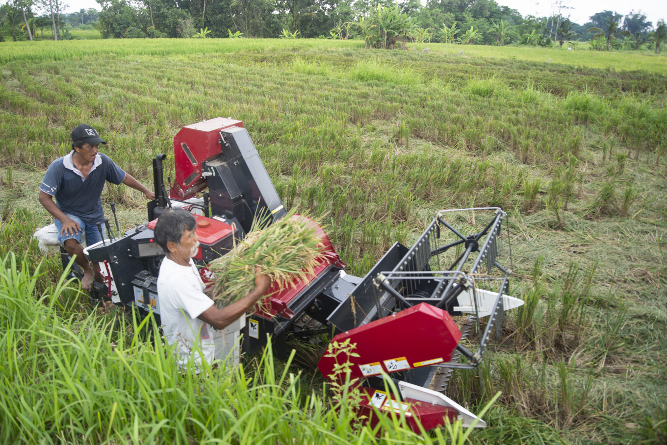 Government prepares cash aid, production subsidies for farmers in need