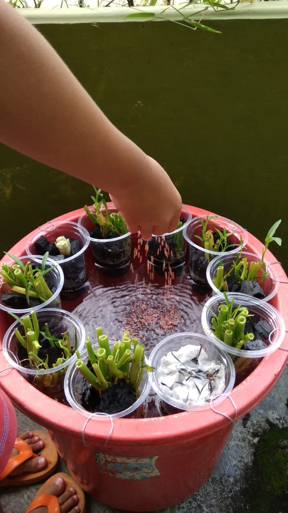 Plastic cups are used to house plants and are placed on top of a makeshift catfish pond owned by Yogyakarta resident Arsih, who started her own small garden as a way to cope with the stress of the COVID-19 outbreak, as well as to provide food for her family.