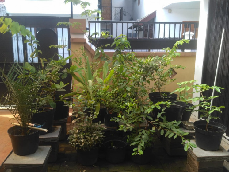 A vegetable garden owned Venda Pratama, a graduate student from Yogyakarta who created his own small garden at home that has been enjoyed by his family and neighbors.