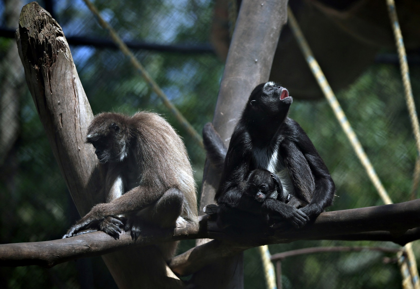 Covid, Quarantine among names suggested for newborn animals in Colombian zoo