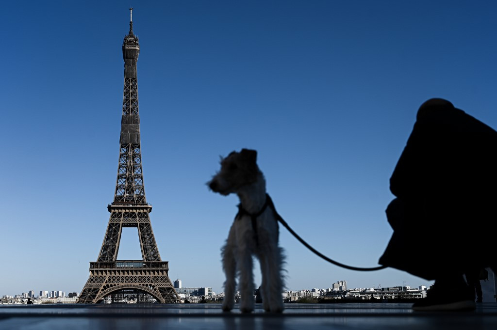 French to be allowed outside to adopt a pet