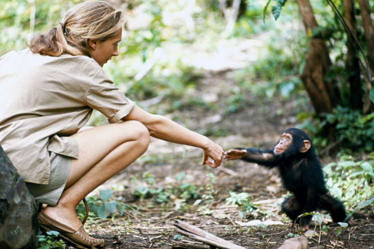 Jane Goodall in the 1965 film 'Miss Goodall and the Wild Chimpanzees', National Geographic Society's first documentary.