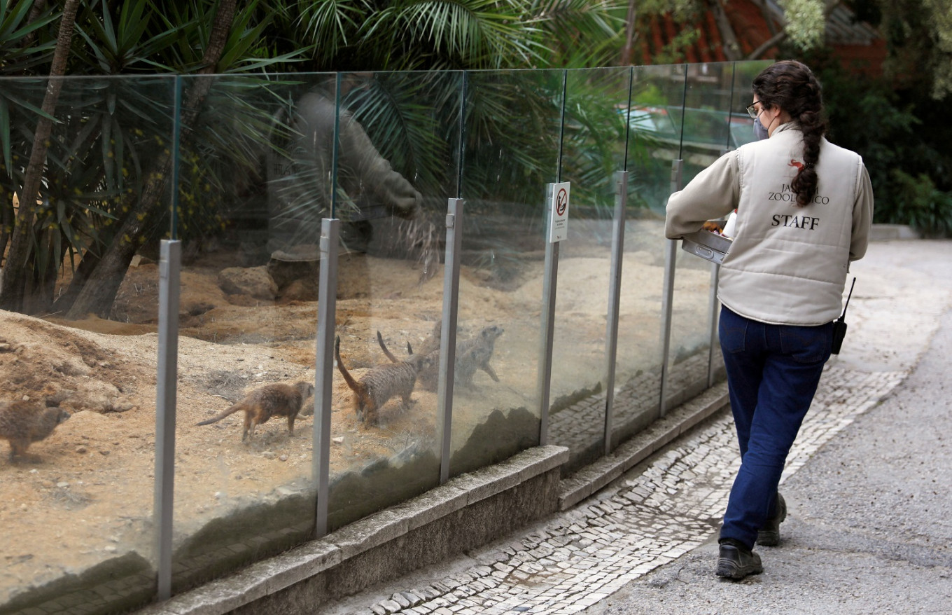 Lisbon zoo animals feel keepers' love while public away