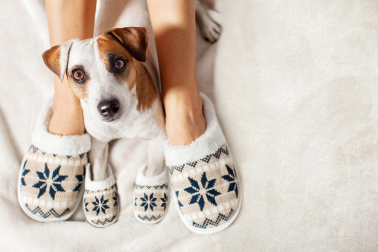 A family pet could relieve stress for parents of kids with autism