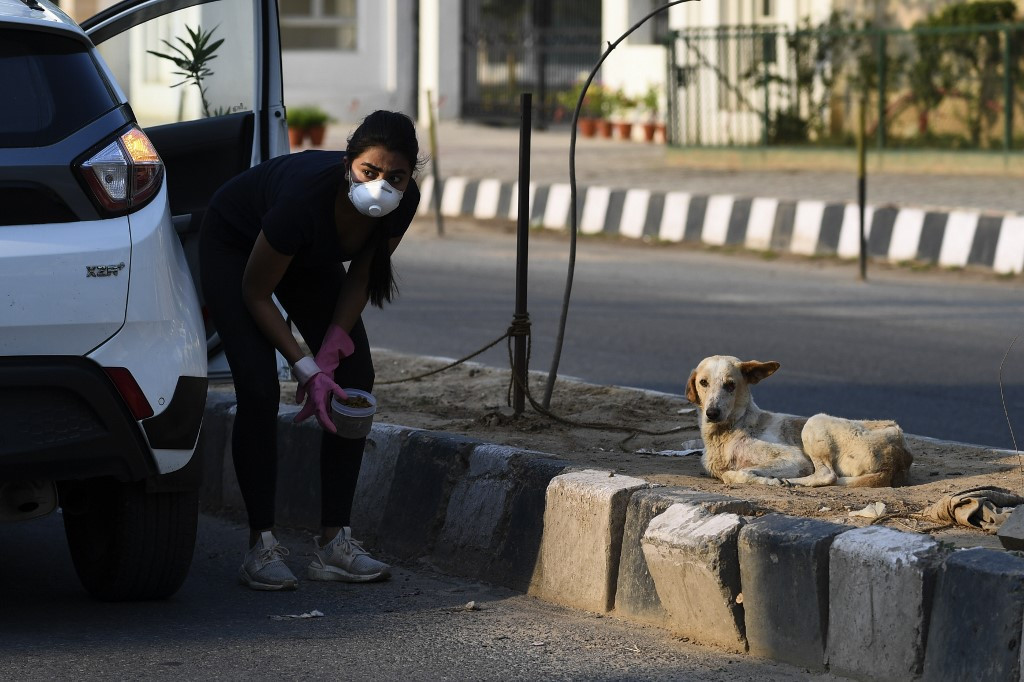 Animal lovers take to India's streets to feed virus strays