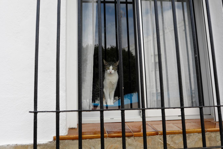 Spanish cat tests positive for coronavirus