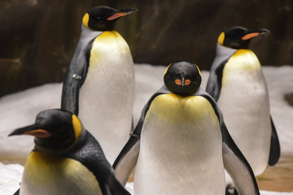 Researchers go 'cuckoo' over Antarctic penguin poop